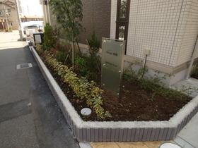 植木もこれから成長します♪