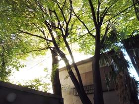 オシャレな木がドーン!と植えてあります♪