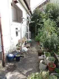 喜楽荘植栽