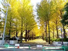 都立城北中央公園(秋~冬)