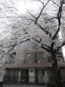 プチヒルズ西小山お部屋からも桜が綺麗です