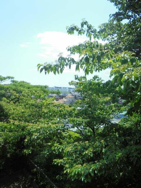 ハイム蘭景色