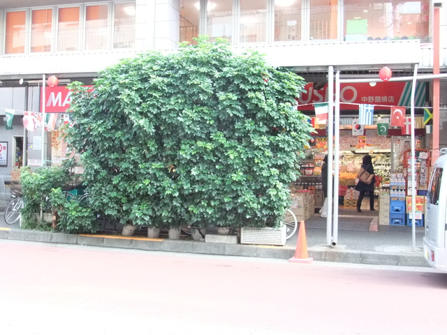 confort MARUZEN[周辺施設]スーパー