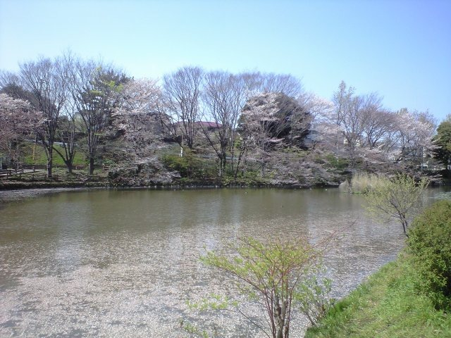 グランツ妙蓮寺[周辺施設]公園